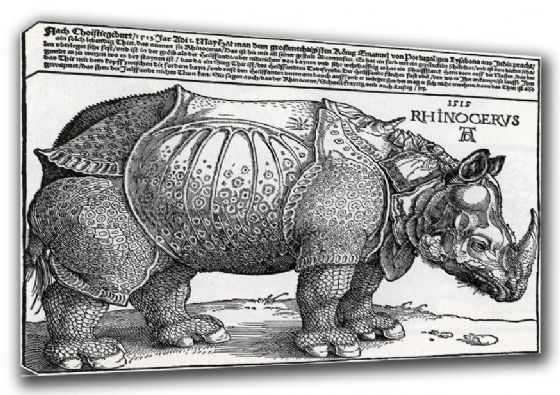 Durer, Albrecht: Rhinoceros. Fine Art Canvas. Sizes: A3/A2/A1 (00160)